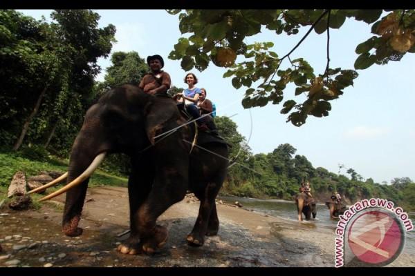 Kawasan Ekowisata Tangkahan Langkat Padat Pengunjung